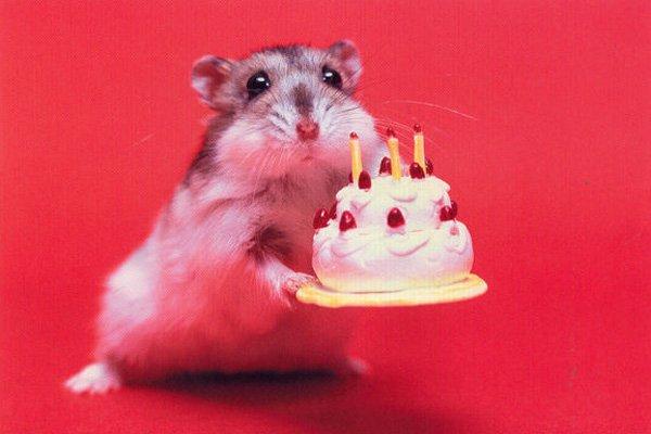 Funny-Happy-Birthday-17
