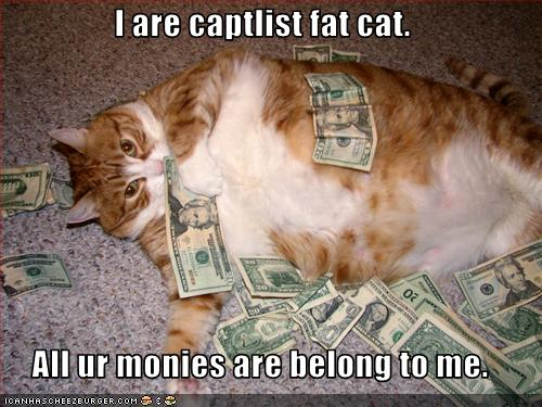 funny-pictures-cat-has-a-lot-of-money11