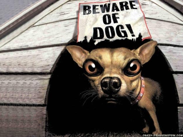 beware-of-dog-funny-animal-wallpapers