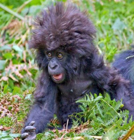 Crazy Monkey Face