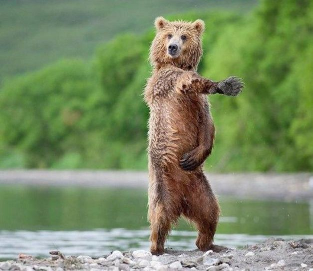 funny-pictures-dancing-animals-cute3-jpg-pagespeed-ce-6u-hhbznid