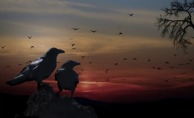crows-559274_1280-1024x621