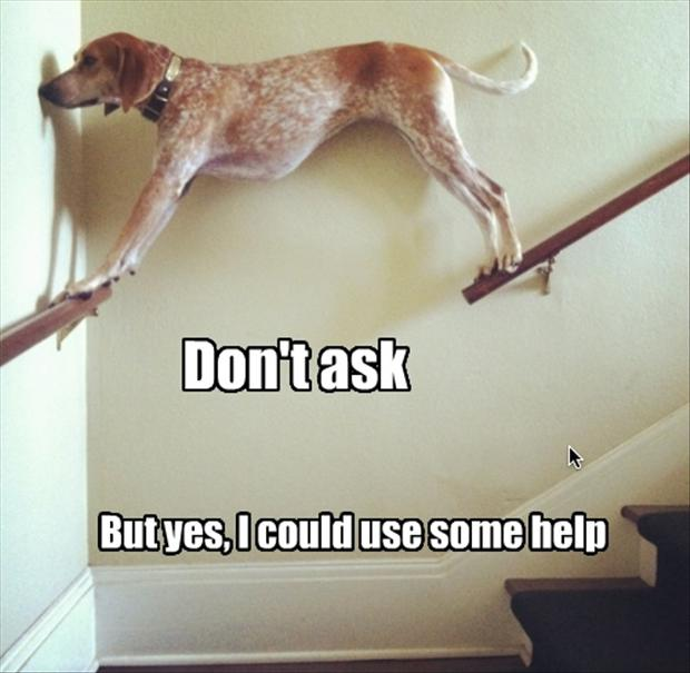 dog-stuck-on-stair-way-rails